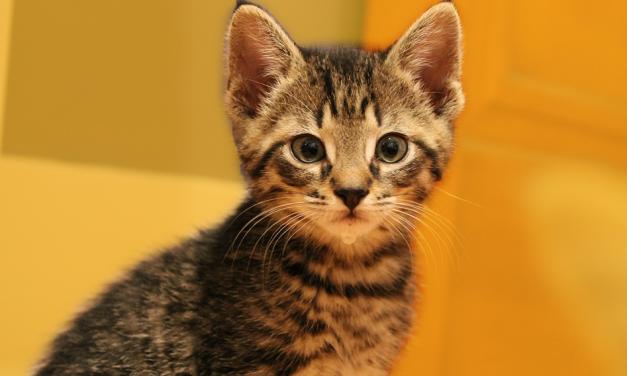 Câlinez des chats en CDI
