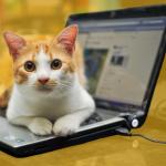 Amenez votre animal de compagnie au bureau